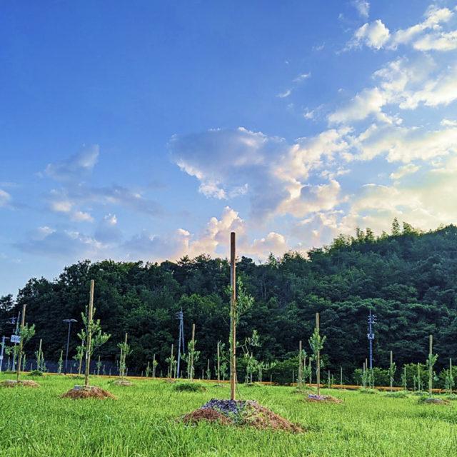 山口県平生町の阿多田オリーブパークで「オリーブ植樹」イベントを開催予定