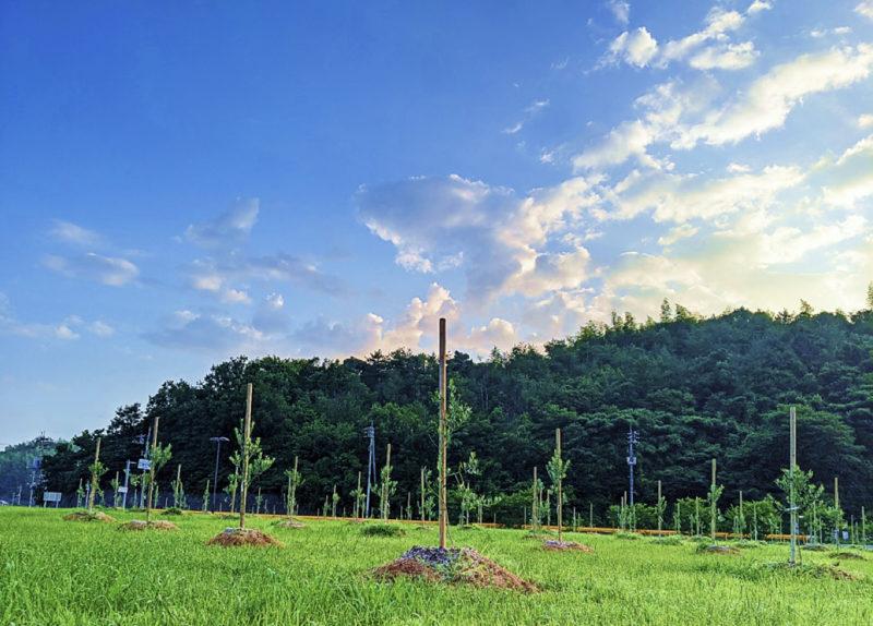 イタリアーノひらお 阿多田オリーブパーク植樹